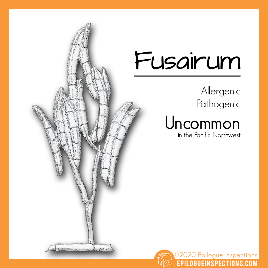 Fusairum